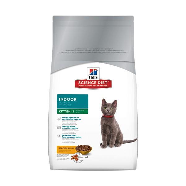 Feline indoor kitten