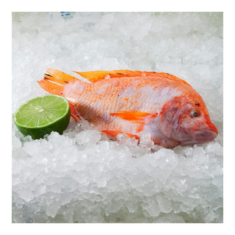 product_branchTilapia