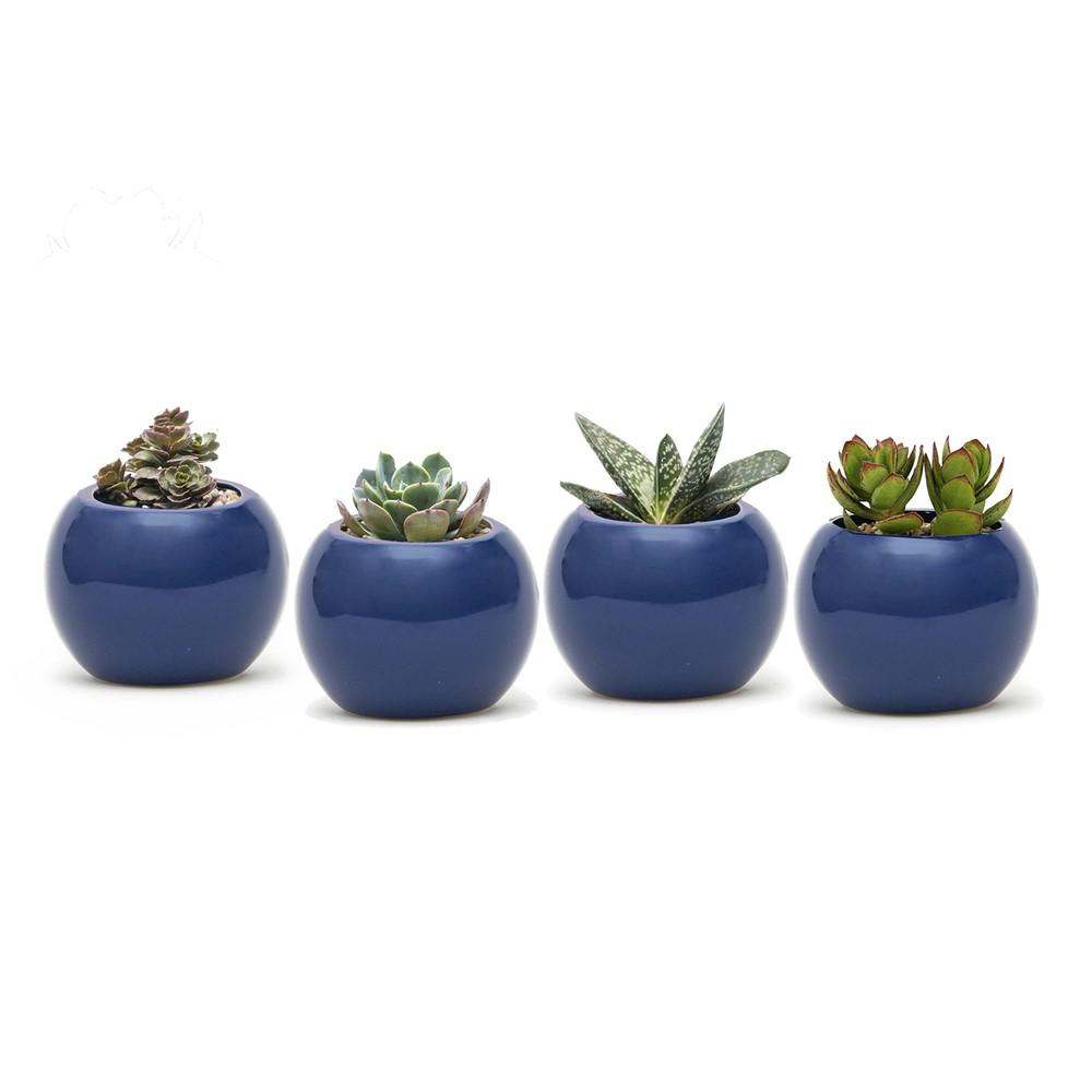 Set 4 suculentas maceteros cerámica azul