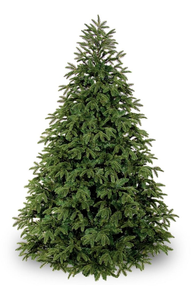 Christmas tree - Fraser Fir