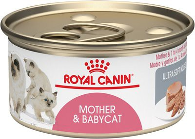 Lata mother & babycat