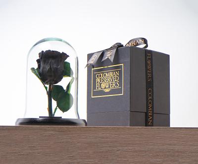 Domo mini rosa negra Medidas 16x11
