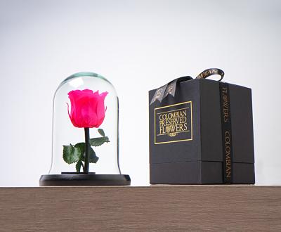 Domo mini rosa fucsia Medidas 16x11