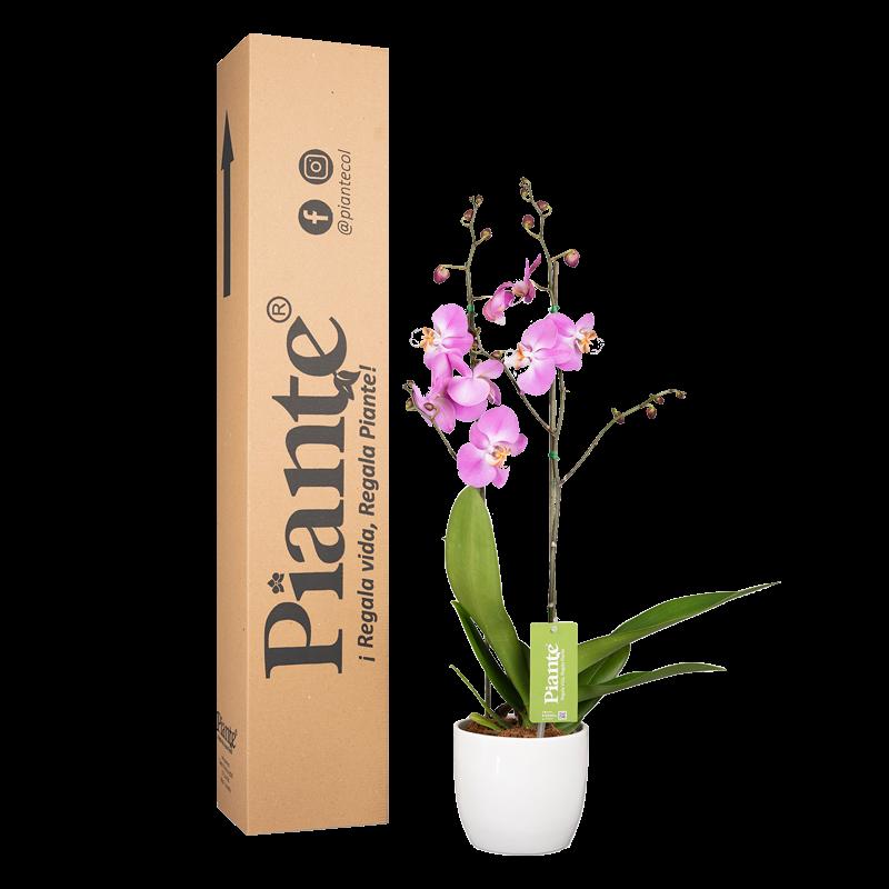 Orquídea supreme rosada y matera cerámica Caja  Altura promedio: 55cms