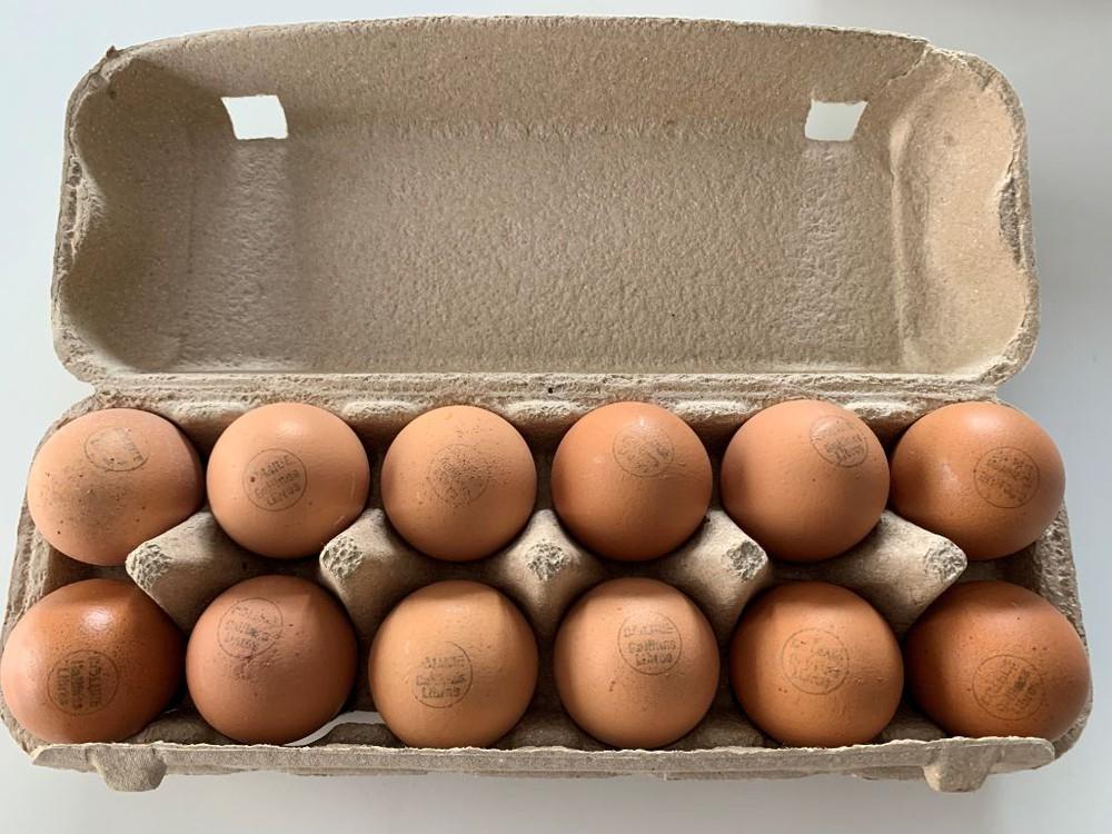 Huevos gallinas libres