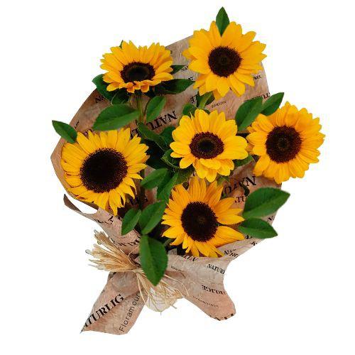 Pucón - ramo de 6 girasoles ( Flores Naturales ) Ramo de flores atadas envuelto