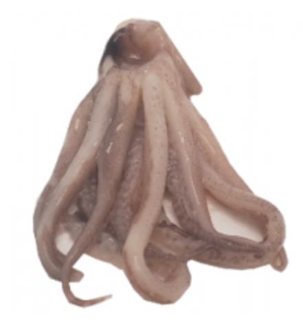 Coronas de calamar Bolsa 500gr
