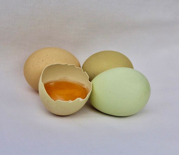 Huevos orgánicos de gallinas libres Bandeja 30 u