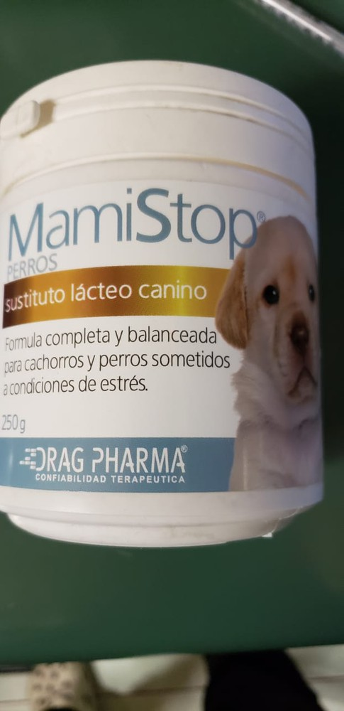 Mami stop perro