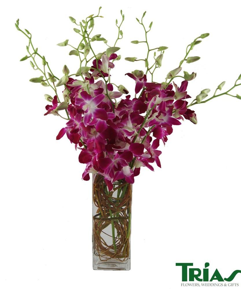 Dendrobian orchids square vase Arrangement