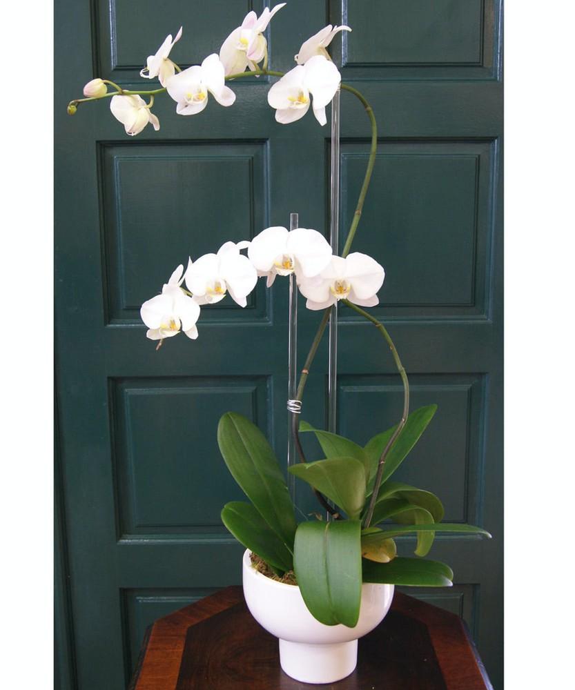 Orchid plants Arrangement