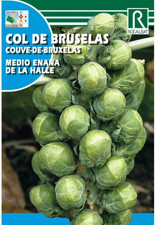 Col de bruselas semi enana halle Sobre 8 gr