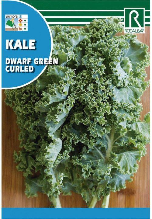 Kale dwarf green curked Sobre 6 gr