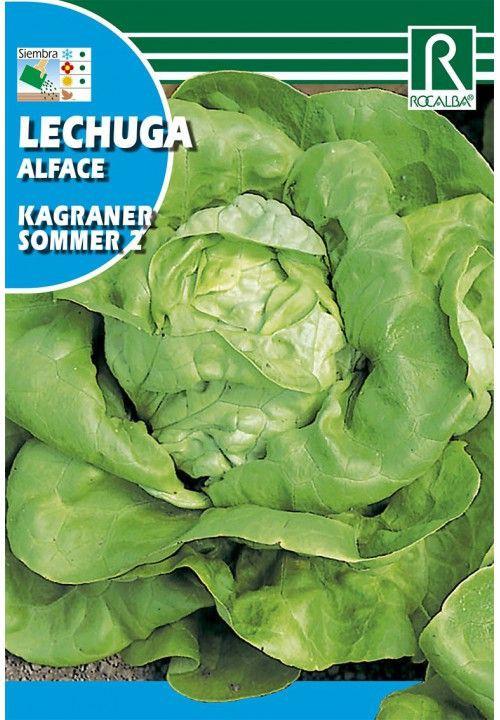 Lechuga kagraner sommer 2 Sobre 6 gr