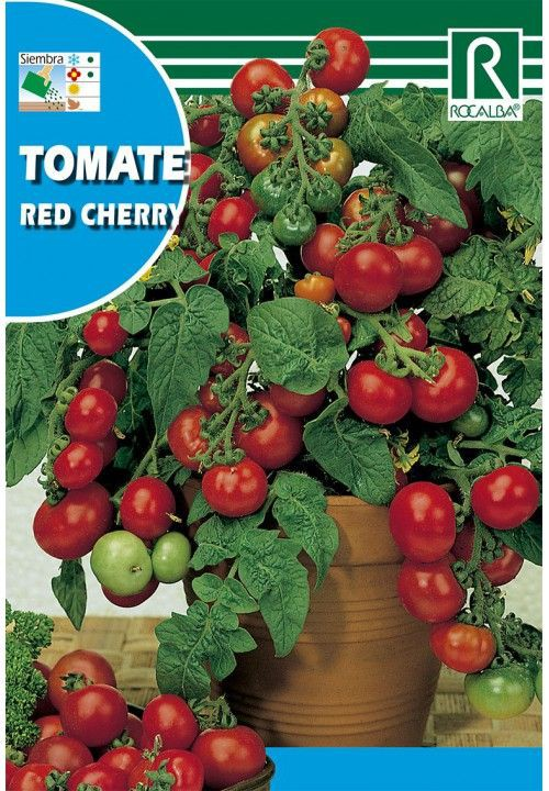 Tomate red cherry 1 gr