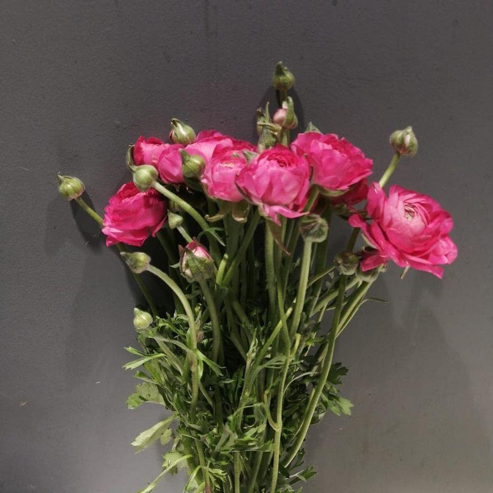 Bouquet Ranuculos