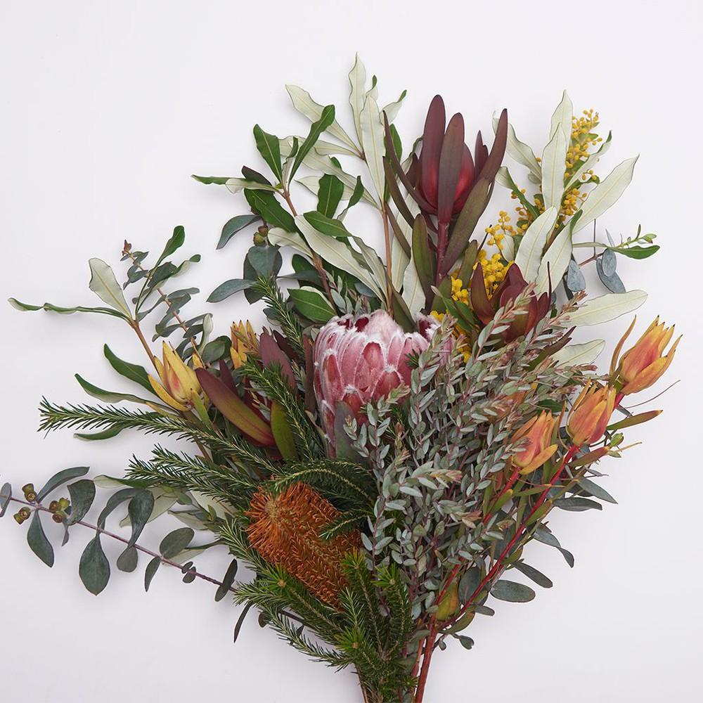 Mix leucadendron Ramo