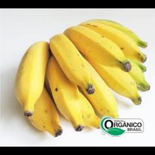 Banana prata orgânica cacho Cacho