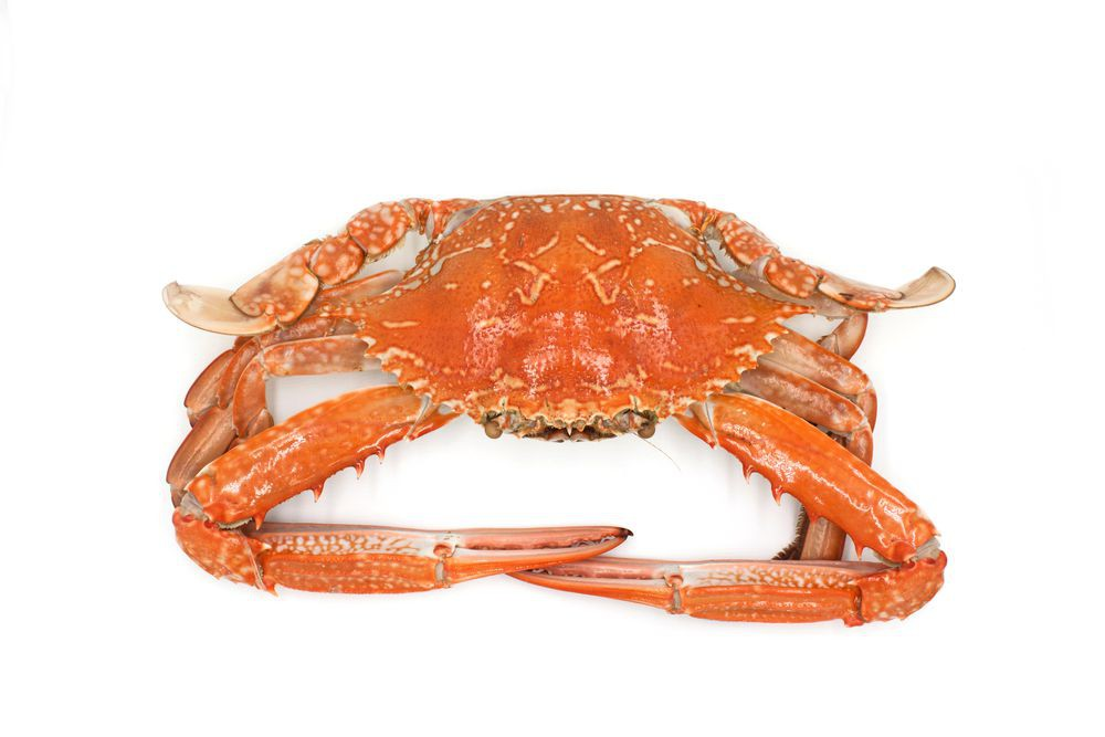 Hard shell blue crab (cooked) pc