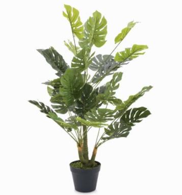 Planta monstera 90X20X20 Cm
