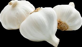 Organic garlic Bulk price per Kg