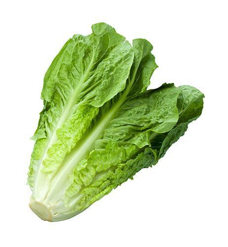 Organic romaine lettuce Bulk price per Kg