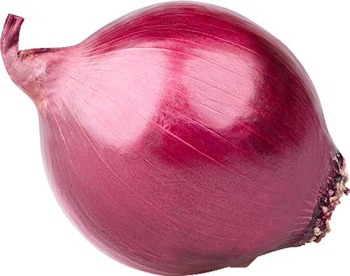 Organic red onion Bulk price per Kg