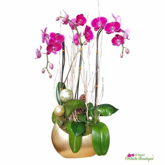 "Pop pop the gold days phalaenopsis orchid arrangement Approx. 28"" h x 8"" w"