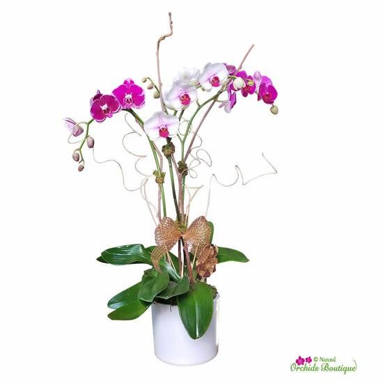 "Winter angel phalaenopsis orchid arrangement Approx. 30"" h x 9"" w"
