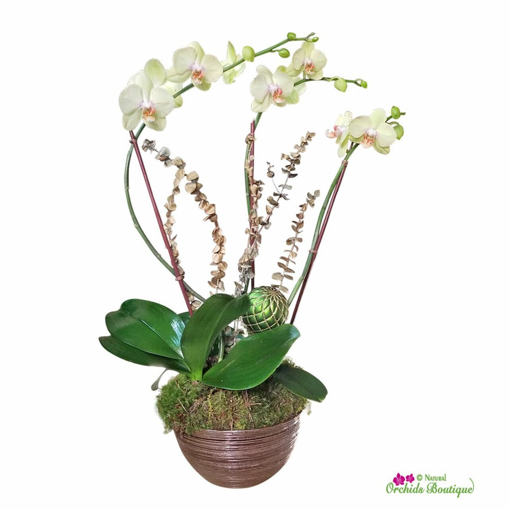"""South for the winter phalaenopsis orchid arrangement Approx. 30"""" h x 8"""" w"""
