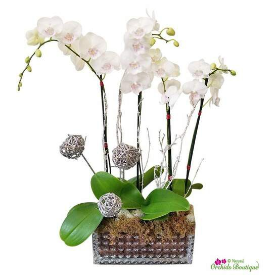 """Iceland phalaenopsis orchid arrangement Approx.16"""" h x 10"""" w"""