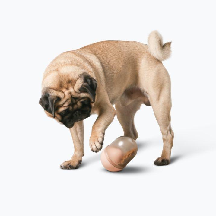 Dispensador de mascotas pidan® - cápsula - rosa 1 box