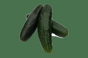 Pepino cohombro Precio por kg, venta por libra