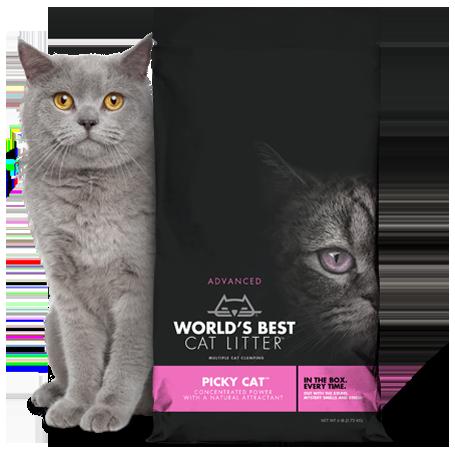 Arena wbcl pink cat