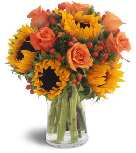 Sweet harvest sunflowers Standard