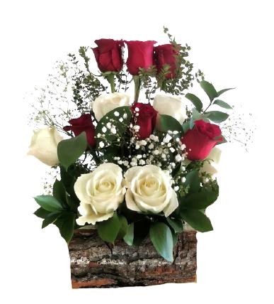 Rose 12 flores
