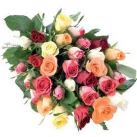 Seleccion de rosas 1