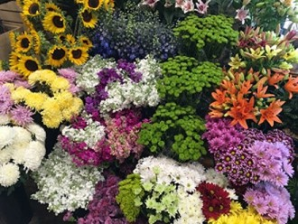 Deal of the day 1 bouquet