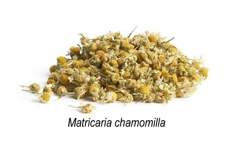 Camomila chá