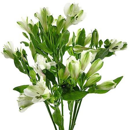 Astroemeria blanca importada Ramo de 10 varas