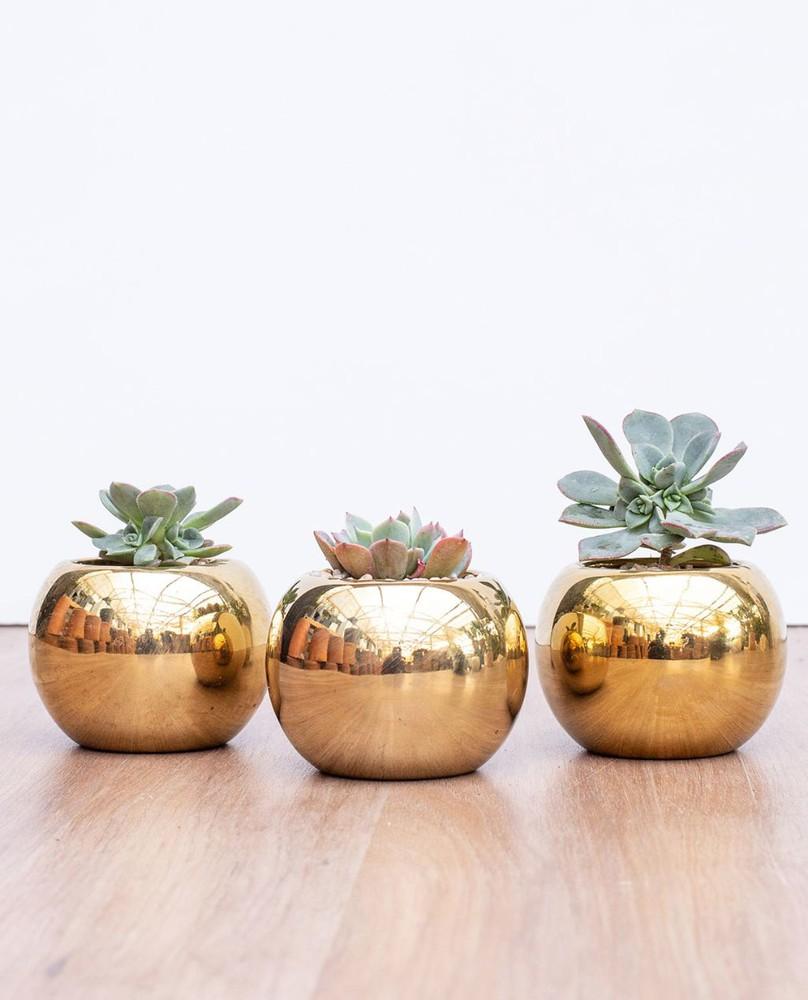 Set 3 suculentas maceteros gold
