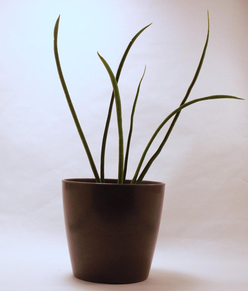 Eco pot 1 ct