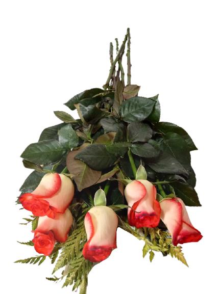 Rosas bicolores 5 varas aprox
