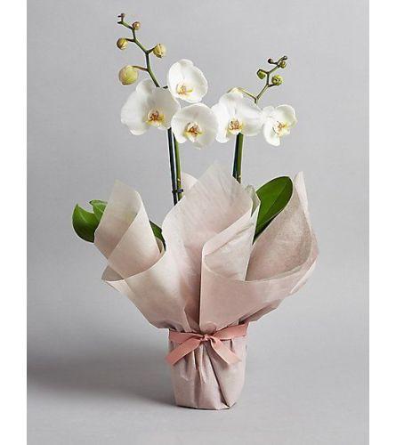 2 stem orchid - choose colour