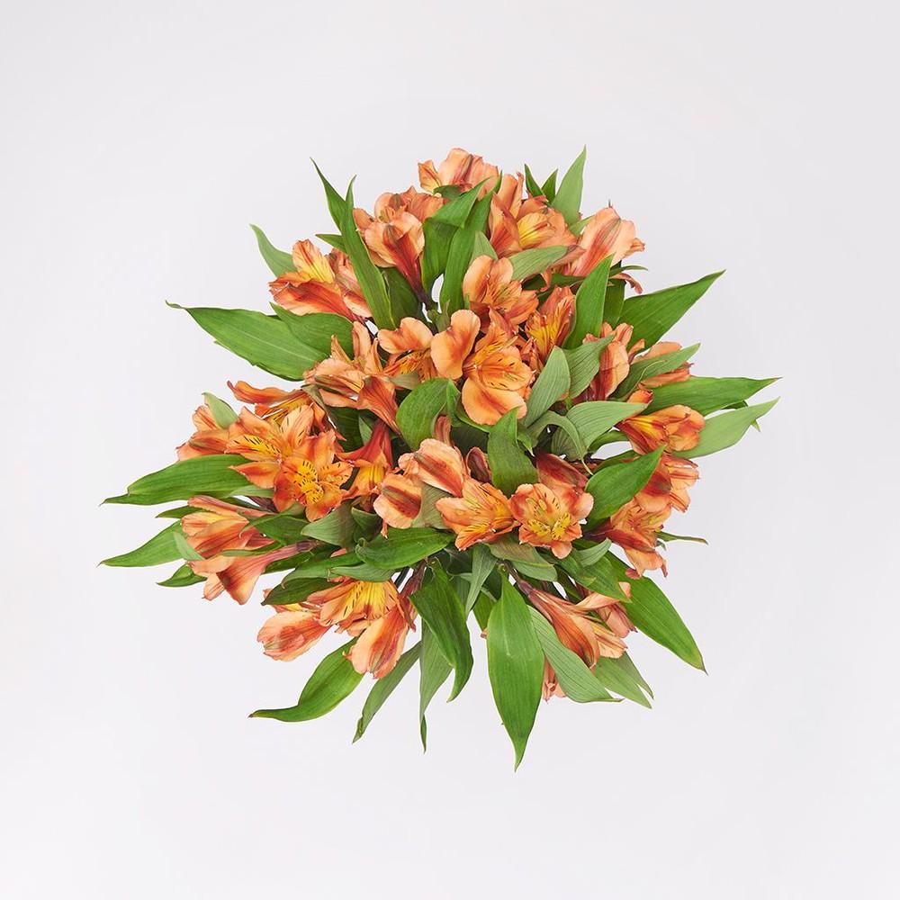 Alstroemeria naranja Ramo de 10 Varas