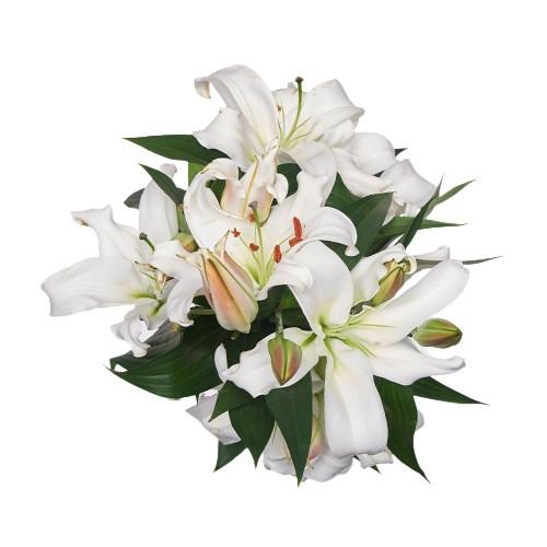 Lilium oriental blanco 10 varas Ramo de 10 varas
