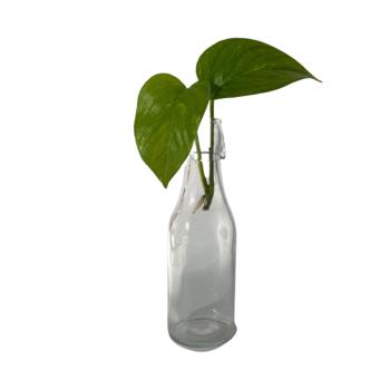 Botella propagación