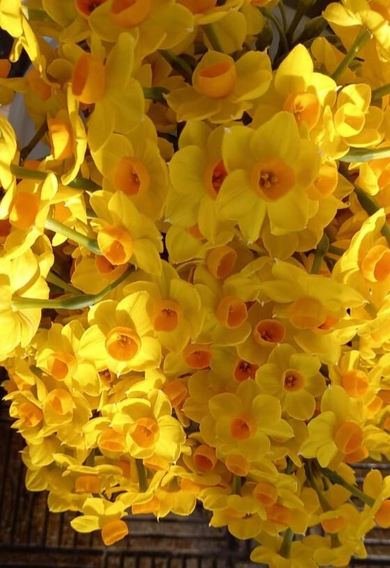 Ramo de bellas 10 varas de flores aromáticas