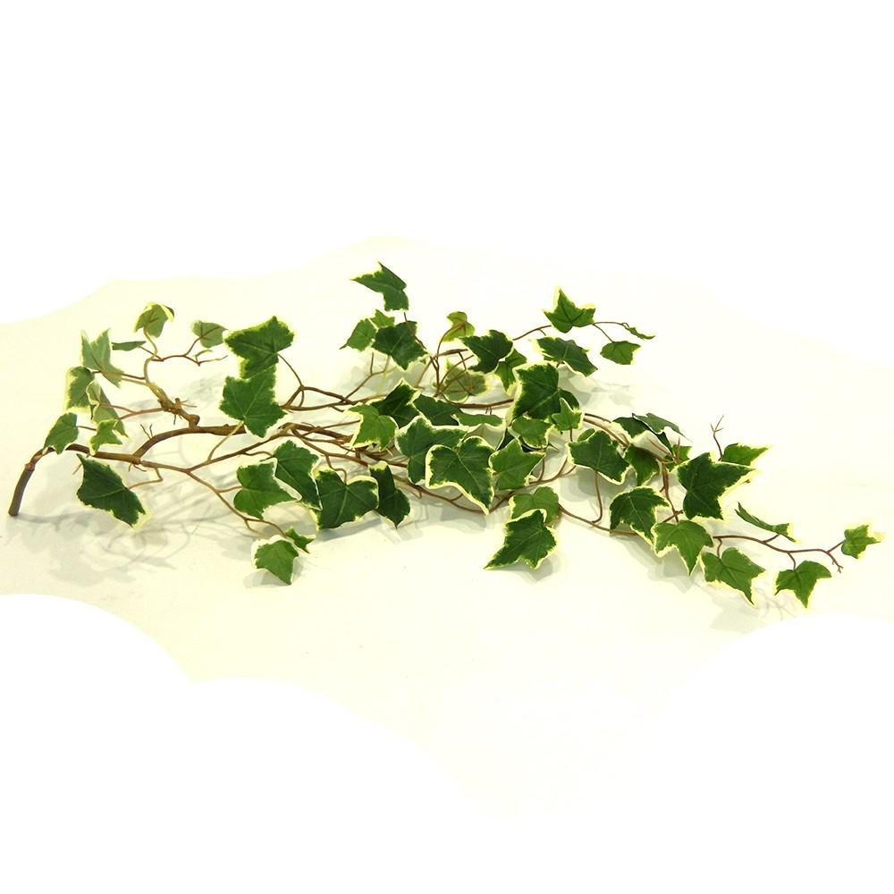 Hoja parra 74cm variegado verde/blanco