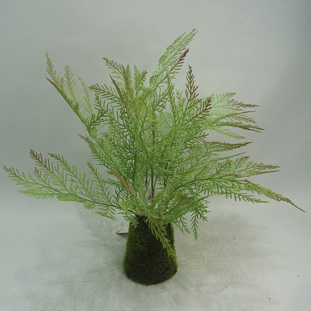 Planta  helecho plumoso 54cm variegado